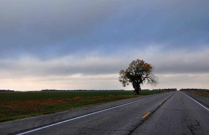 Lonesome highway tree
