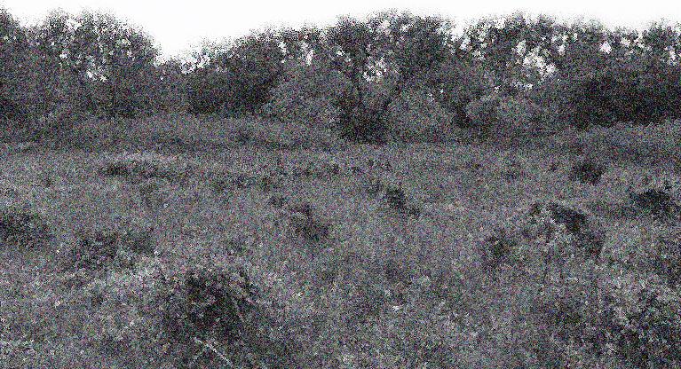 lumpy field