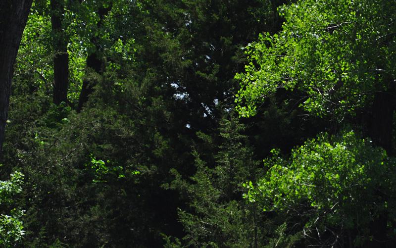 may trees 2