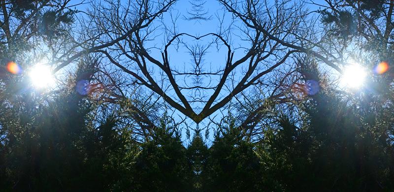 hearttree2