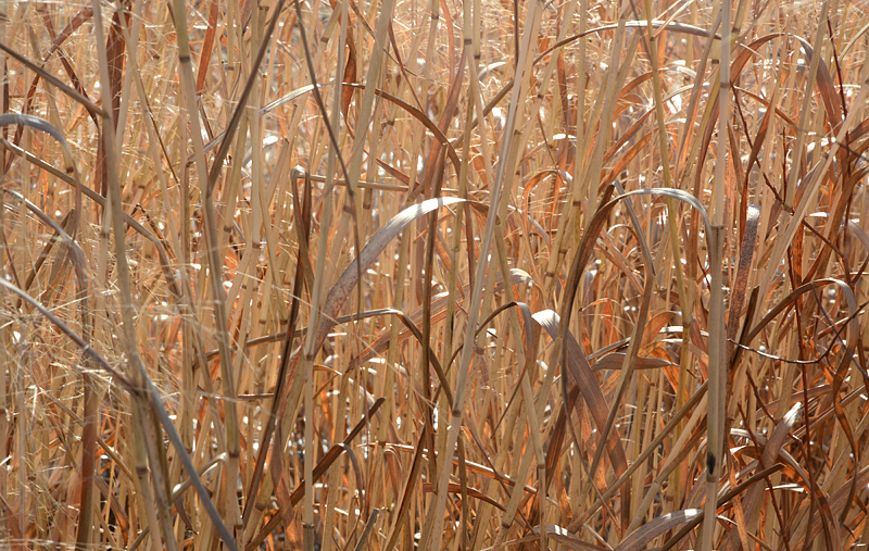 dry grass in the sun