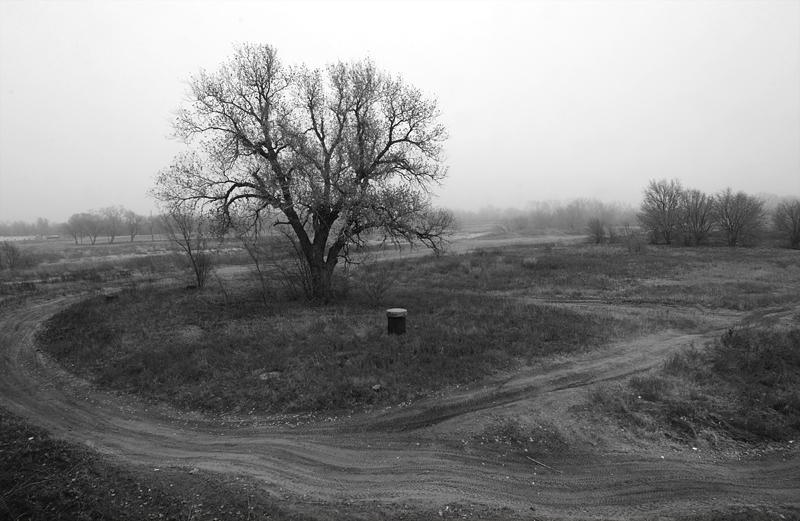 treeloop