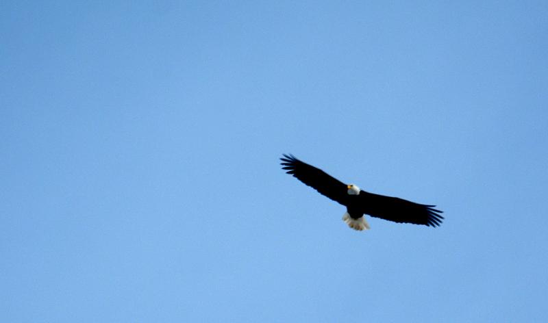 eagle0105