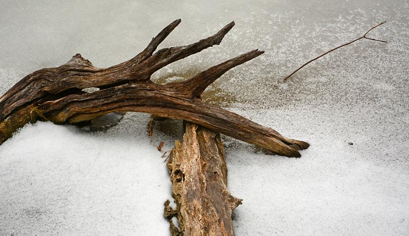 frozen driftwood