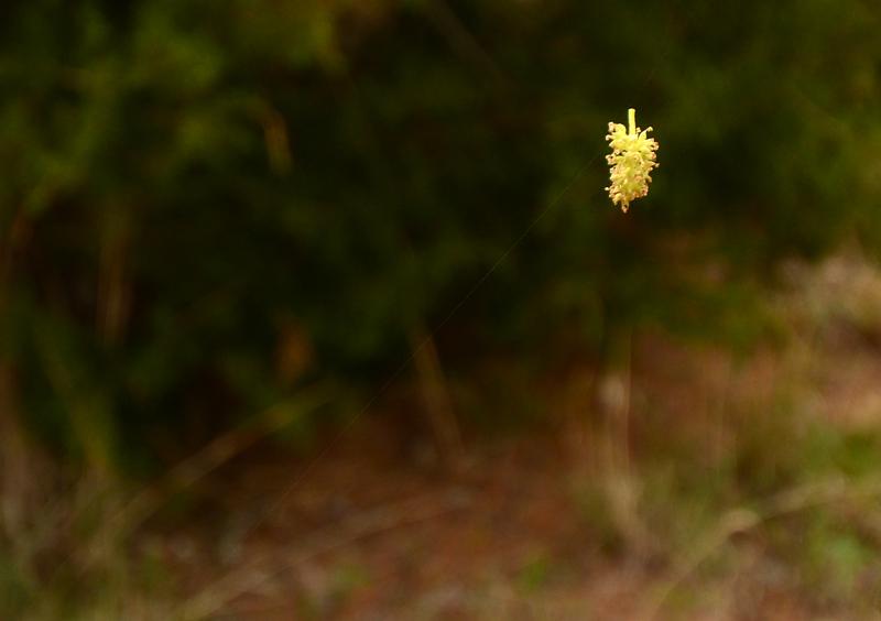 blossomtrap