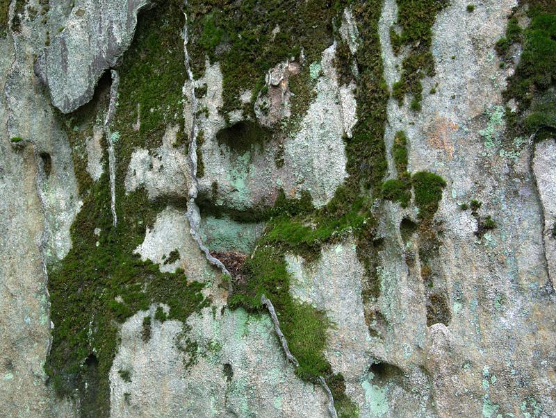 lichenrock