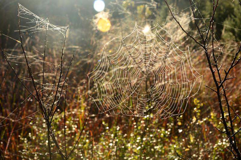 1010spiderwebs