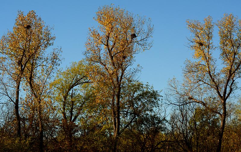 1025-nests