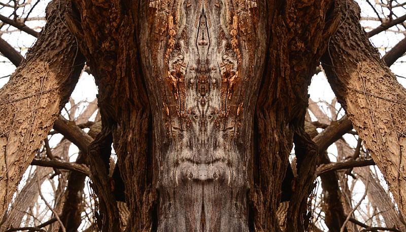 1205-treeman