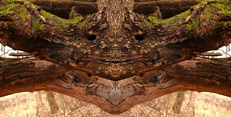 1226-treemen