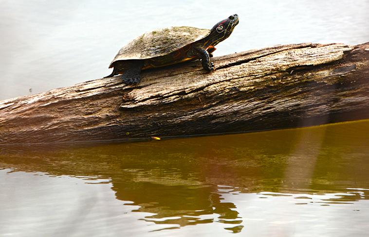 20160326-turtle