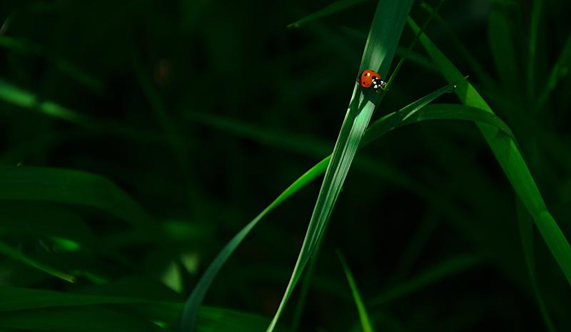 20160529-ladybug