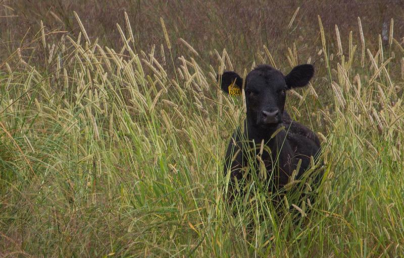 20160914-calf