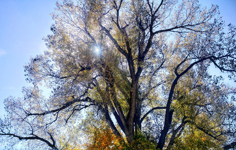 20161021-tree