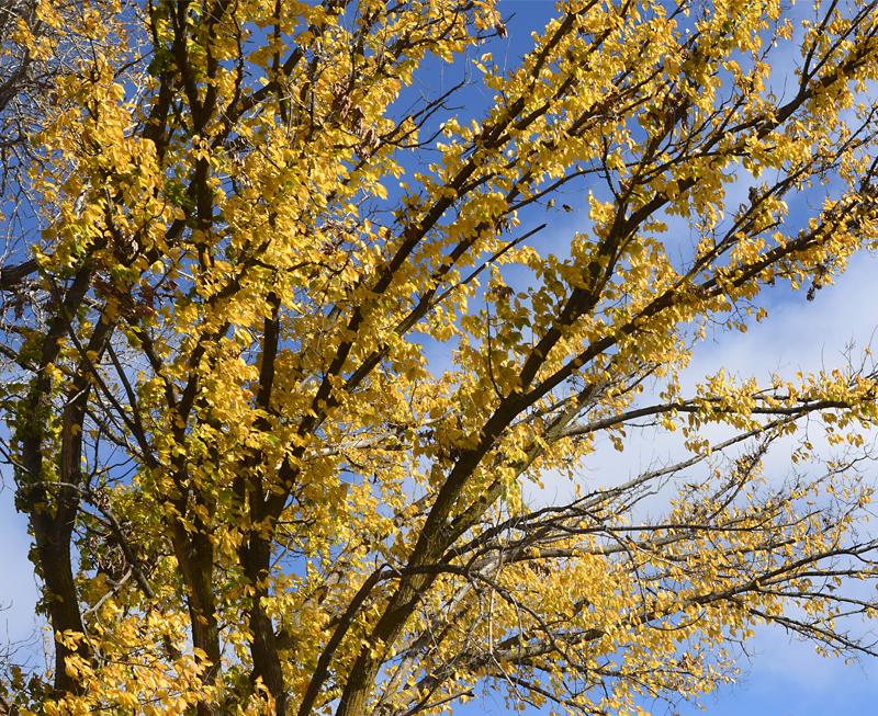 20161118-fallslastfling-yellow_dsc0973